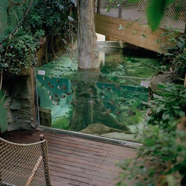 18 陈海舒,《AQUATIC 水族馆, 洛桑》,选自《气泡》系列,2019