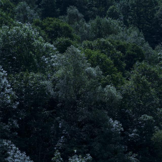 08 奥尔加·卡菲罗,选自《听》系列,2019